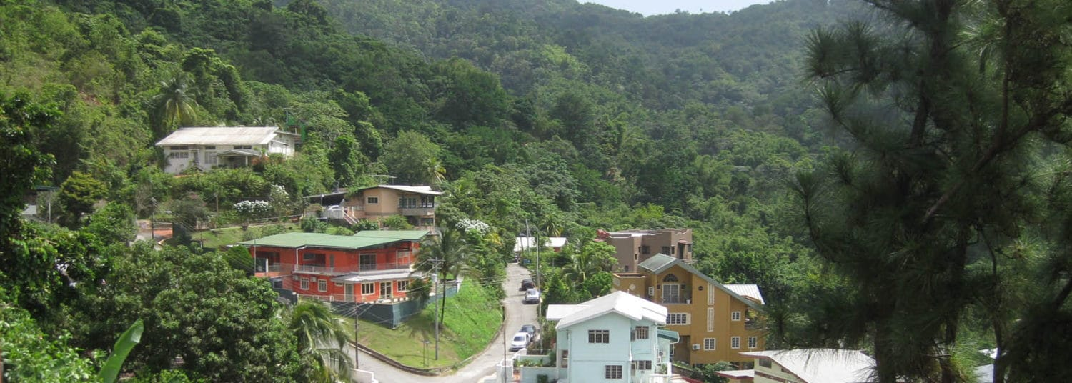 amm-trinidad-mountain-forest