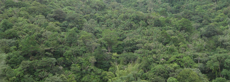 trinidad-jungleforest