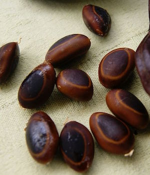 The Story of the Magic Beans